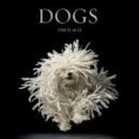 dogs - 1°edição 2010