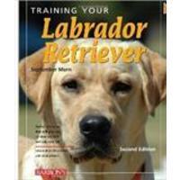 Training Your Labrador Retriever Barron's