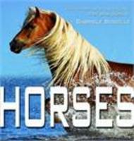 Horses - Their Temperament and Elegance