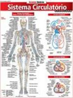 Resumão Medicina Sistema Circulatorio Avançado