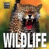 Wildlife Minicube Book
